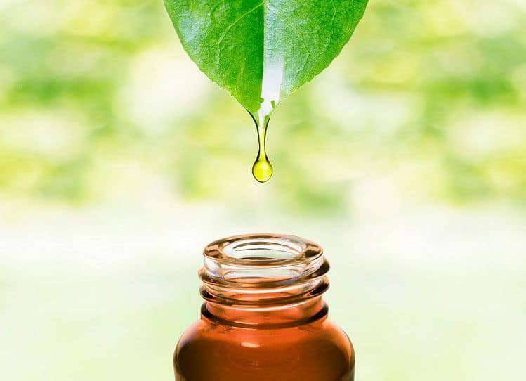 Natural Breath Freshener